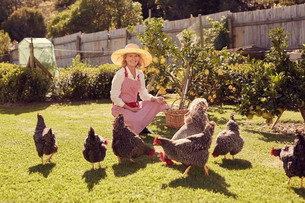 HAPPY HENS: Chickens have engaging and unique personalities. Picture: Shutterstock